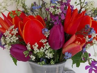 Tulip Connoisseurs