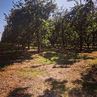 Cider Orchards