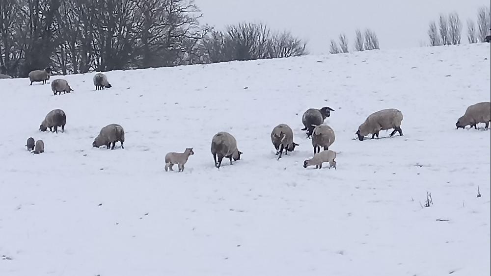 snowy Stocklinch