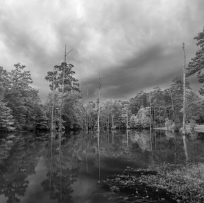 cypress pond, Sam Houston Jones State Park