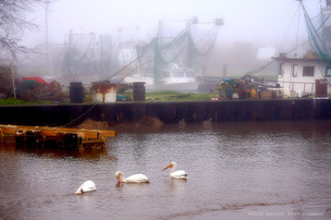 Pelicans and shrimpers in fog