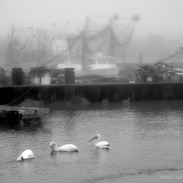 Pelicans and shrimpers in fog - bw