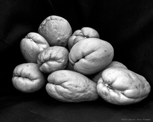 Chayote family