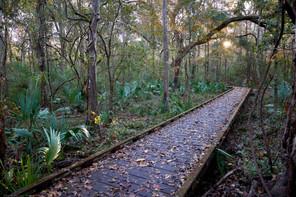 Marsh walkway, Acadian Park, LA