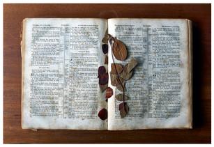 Alton - Bible and rose