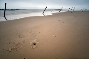 Crab hole, Constance Beach