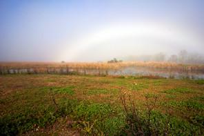 Lacassine fog bow