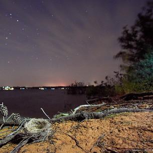 Lakeside still life
