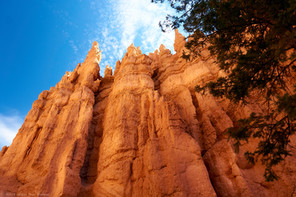 Looking up, Bryce Canyon National Park, Utah