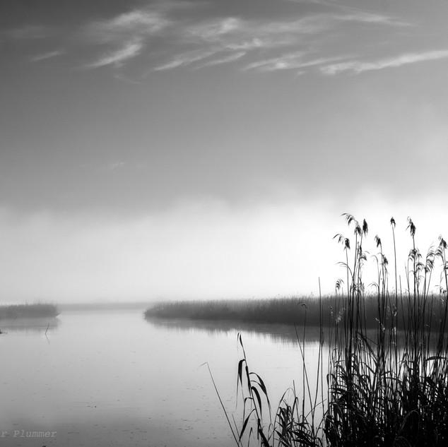 Tranquil marsh - bw