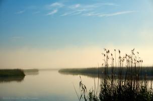 Tranquil marsh