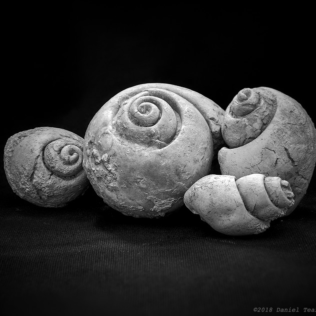 Gastropod fossil family 1