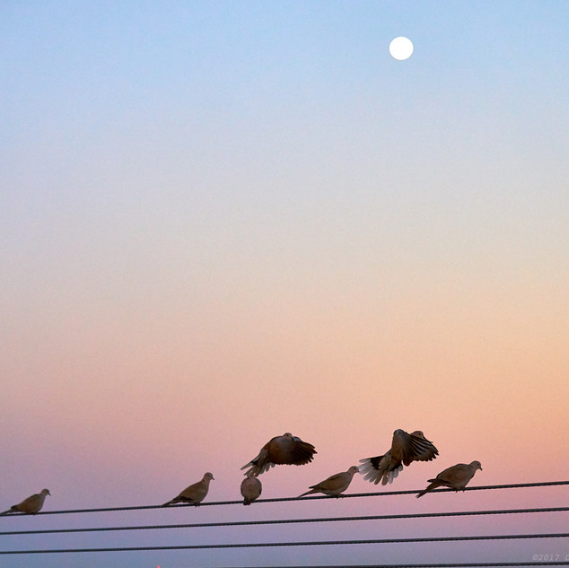 Doves and moon