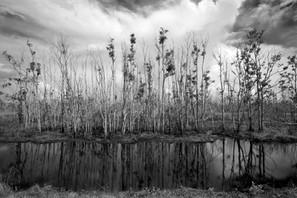 reflections, Cameron Prairie