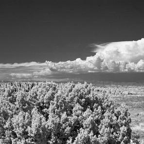 Juniper and rocks, Arches National Park, Utah, IR film image