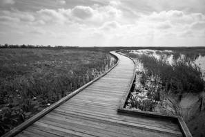 Cameron Prairie walkway 2