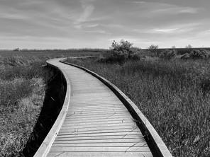 Cameron Prairie walkway 1