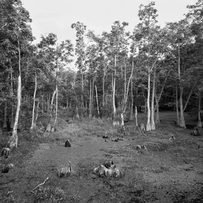 water tupelos and marsh, Sam Houston Jones State Park