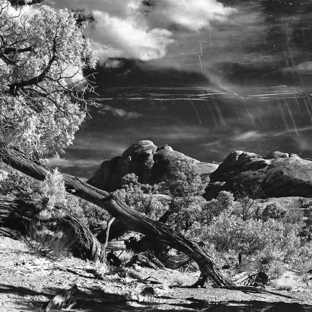 Juniper trunk, Arches National Park, IR film image
