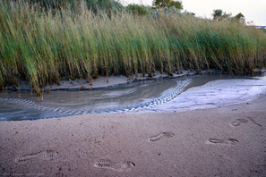Footsteps and marsh grass