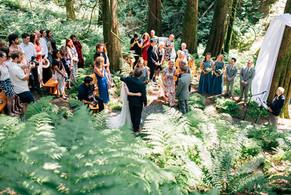 Wedding of ferns