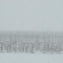 Website Vineyard Snow.JPG