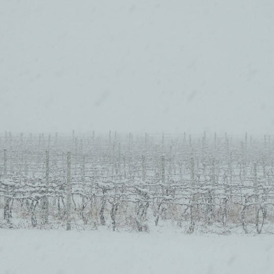 Website Vineyard Snow.JPG