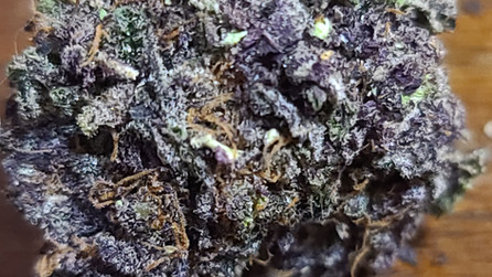 Funeral Cake: Feminized Seeds