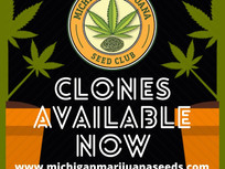 Clones Available Daily: No Pre Orders
