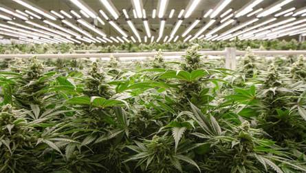 What Happened to Michigan Marijuana Caregivers?