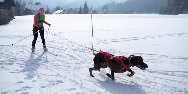Skijoering.jpg
