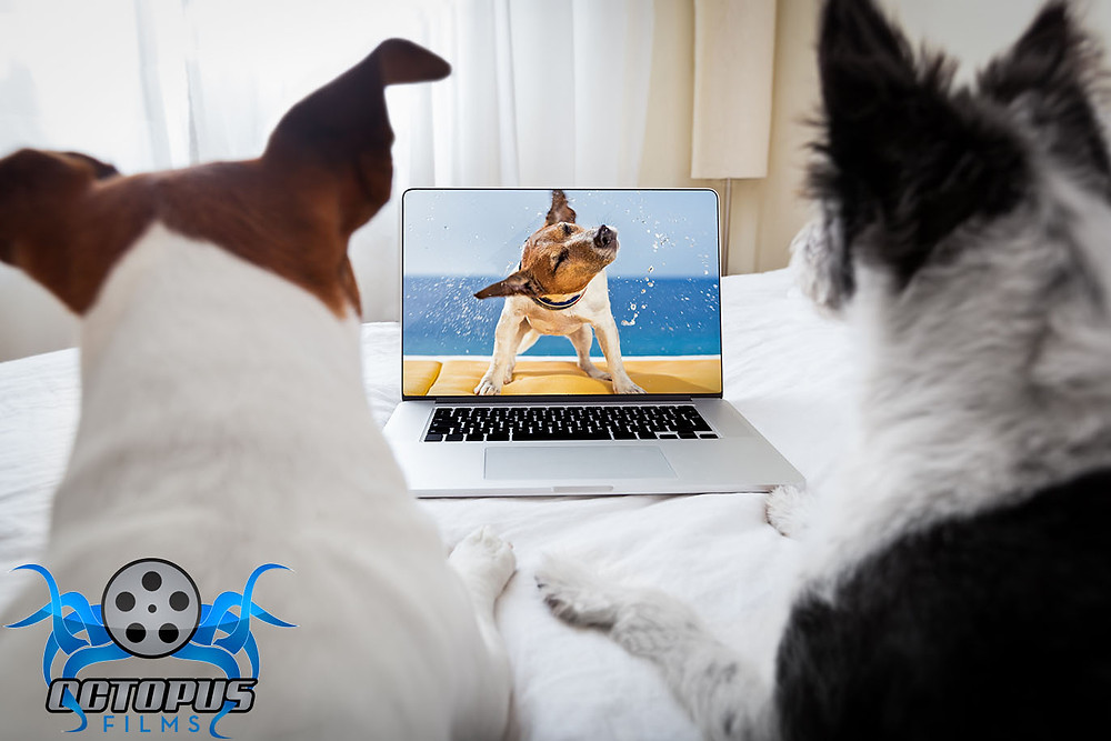 dogs watch promo video with logo.jpg