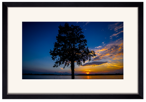 Tree on the River