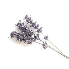Shemana- Essential Oils - Lavender
