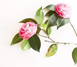 Shemana- botanical oils, plant- based ingredients, natural skincare -Camellia oil