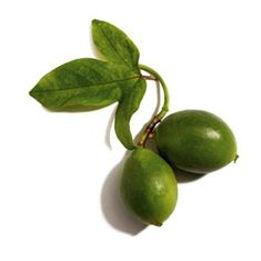Shemana- botanical oils, plant- based ingredients, natural skincare -Kakadu plum