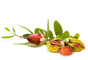 Shemana- botanical oils, plant- based ingredients, natural skincare -jojoba oil