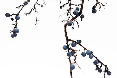 Shemana Crystalline Elixirs - botanical