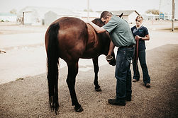 Creekside Veterinary Service, Maple Creek, SK