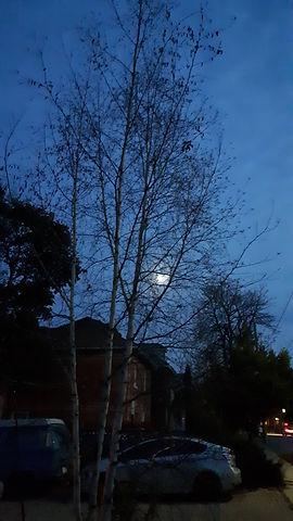 Still the Moon photo.jpg
