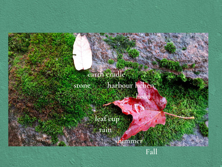 Looking down:  the Bruce Trail, October