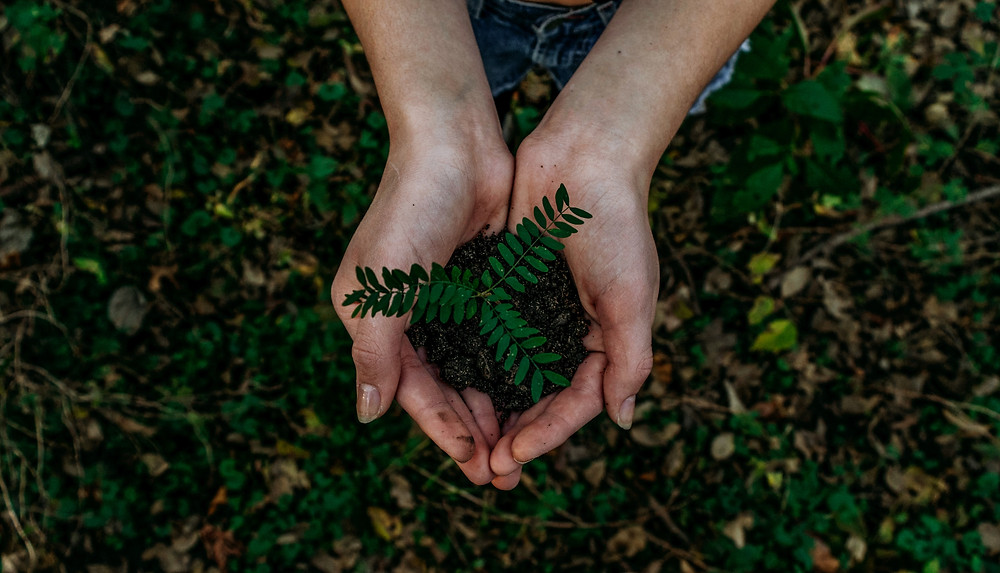 Aerial view of hands cupping soil with small plant above leafy forest floor