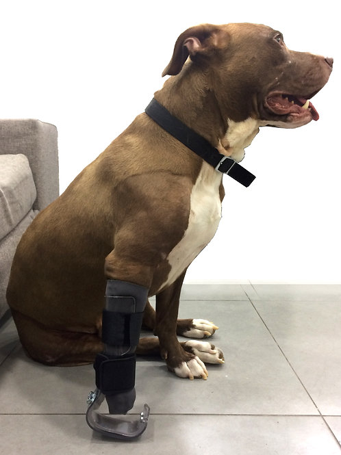 Prosthetic Leg for a Rescued Dog