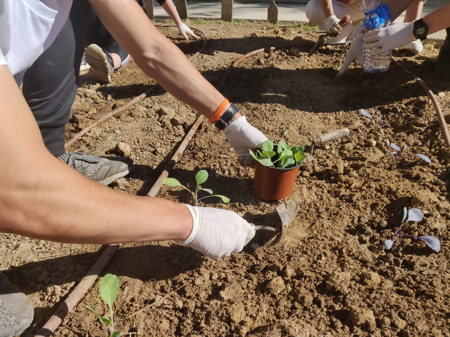 Volunteer at Be'er-Sova Community Garden