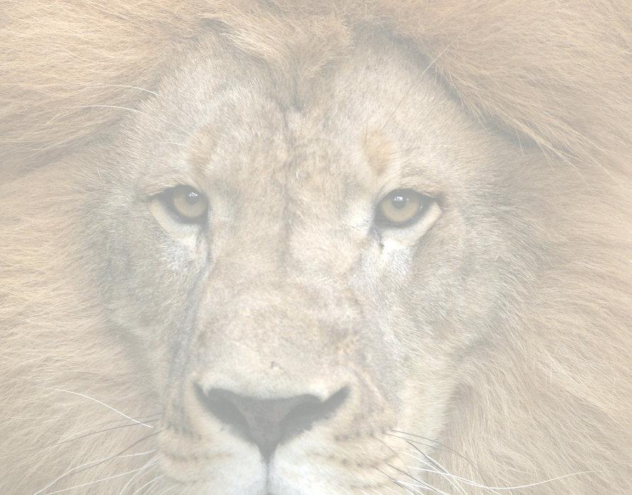 cgzoo_lion-face_edited_edited.jpg