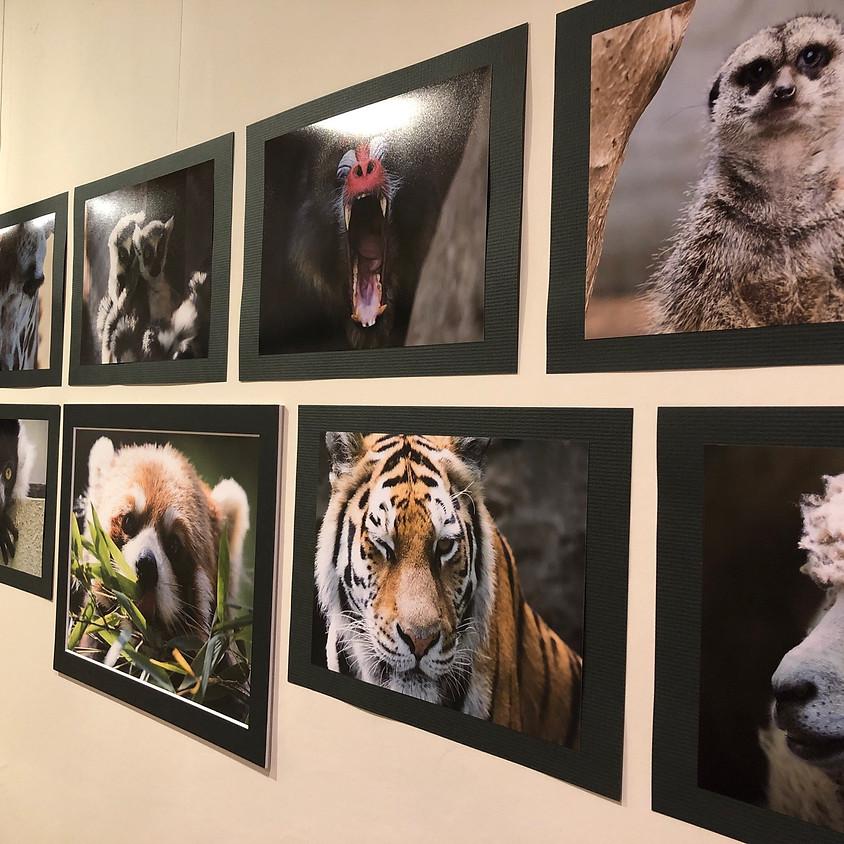 藤井写真展2 『今年も動物園・水族館で写真撮ってきました』