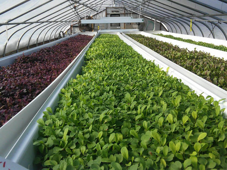 An Intro to Hydroponics
