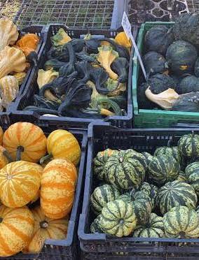 Fall Gourds.jpeg