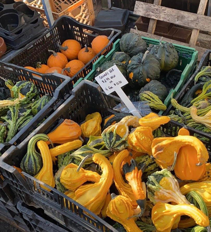 Fall Gourds.jpg