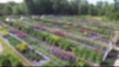 Wholesale Plant Nursery.png